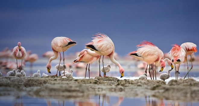 beautiful-birds-in-action- (4)