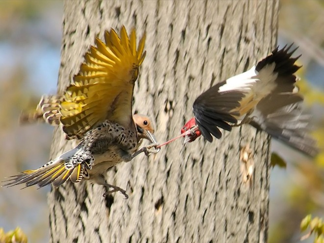 beautiful-birds-in-action- (5)