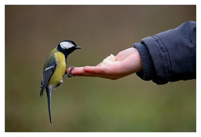 beautiful-birds-in-action- (7)