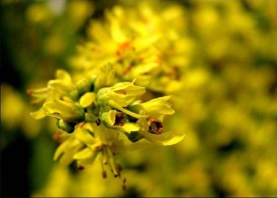 blooming-trees- (5)