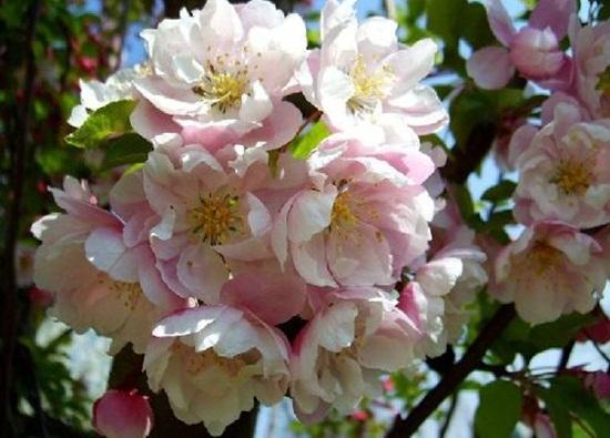 blooming-trees- (8)