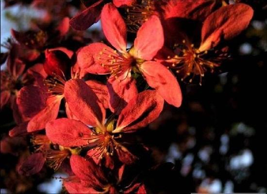 blooming-trees- (16)