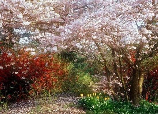 blooming-trees- (20)