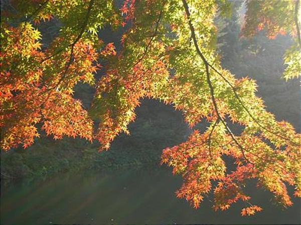 autumn-in-japan- (2)