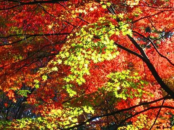autumn-in-japan- (11)