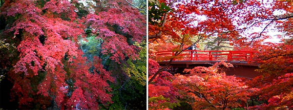 autumn-in-japan- (25)