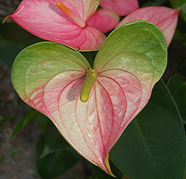 hearts-in-nature- (14)