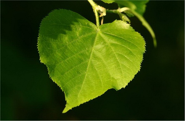 hearts-in-nature- (19)
