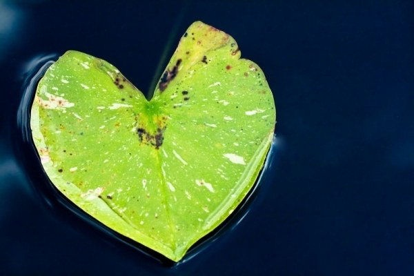 hearts-in-nature- (36)
