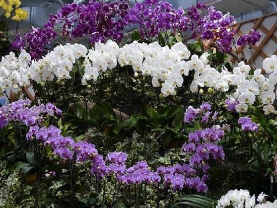 taipei-flora-exposition- (25)