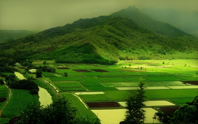 beautiful-green-nature- (6)
