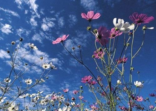 beautiful-flower-photos- (4)