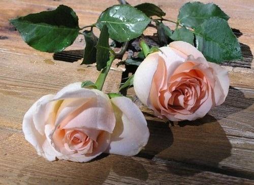 beautiful-flower-photos- (12)