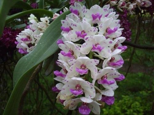 beautiful-flower-photos- (14)