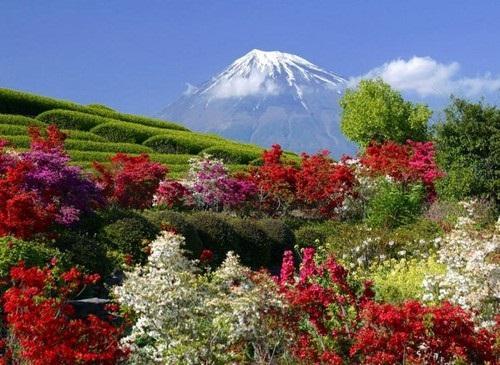 beautiful-flower-photos- (15)