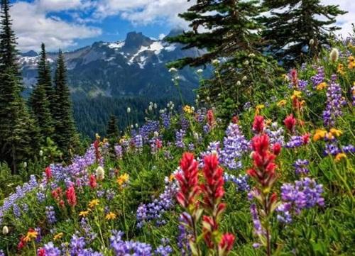 beautiful-flower-photos- (19)