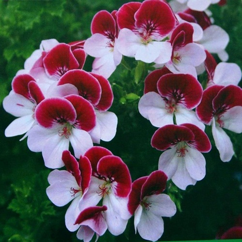 https://i1.wp.com/www.funmag.org/wp-content/uploads/2013/02/beautiful-flower-photos-24.jpg