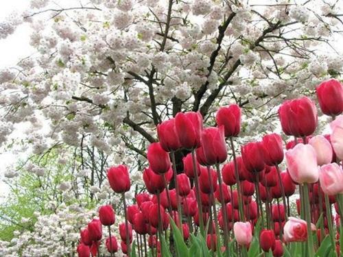 beautiful-flower-photos- (26)