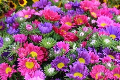 beautiful-flower-photos- (28)