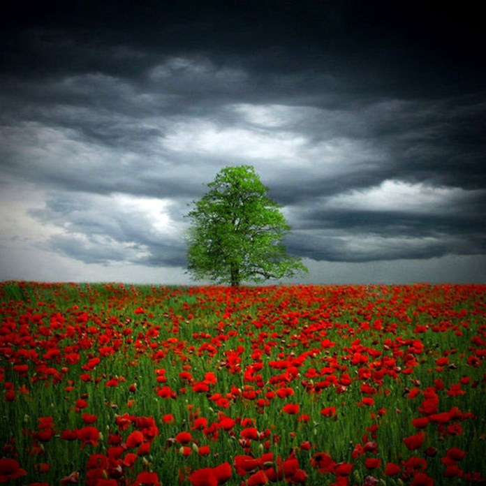 beautiful-landscape-photos-10