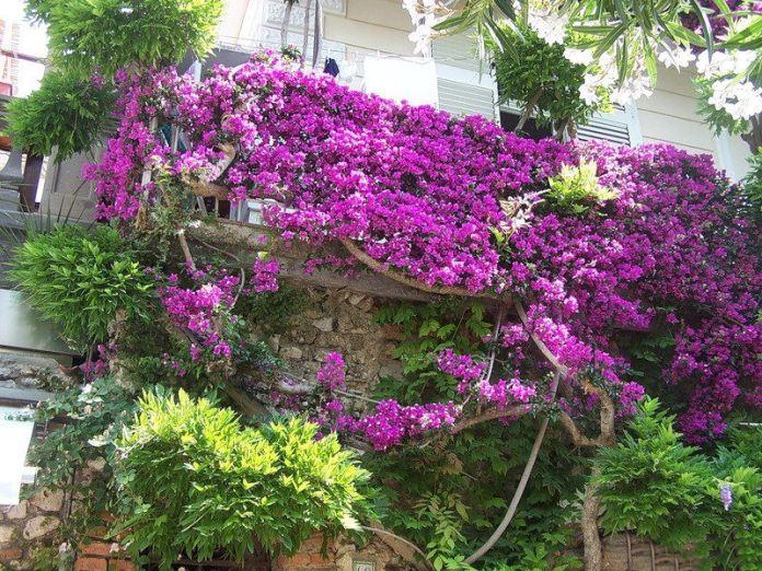 capri-island- (8)