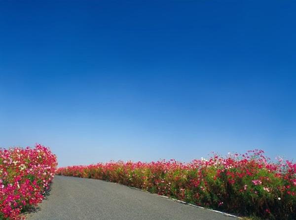 beautiful-roads-of-the-world- (9)