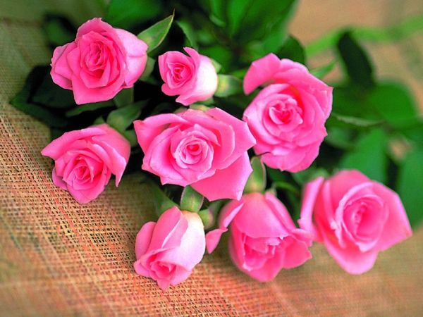 beautiful-roses-wallpapers-20-photos- (1)