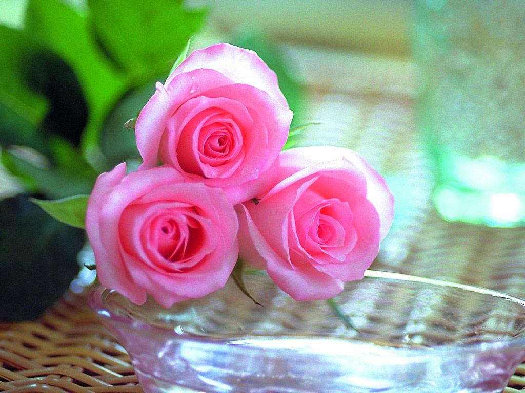 Beautiful Roses Wallpapers Photos