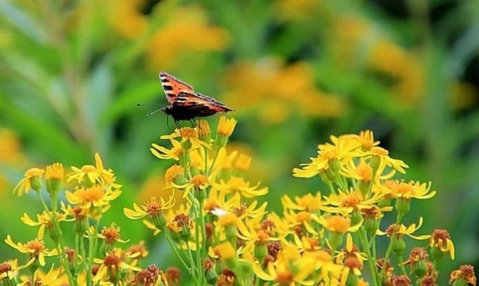 bloom-fresh-flowers- (1)