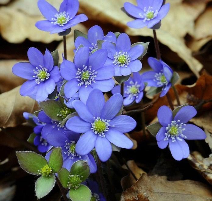 bloom-fresh-flowers- (3)