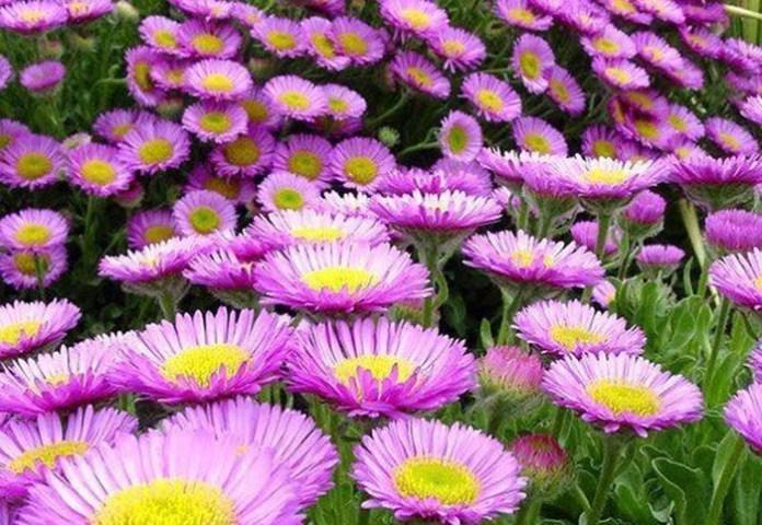 bloom-fresh-flowers- (6)