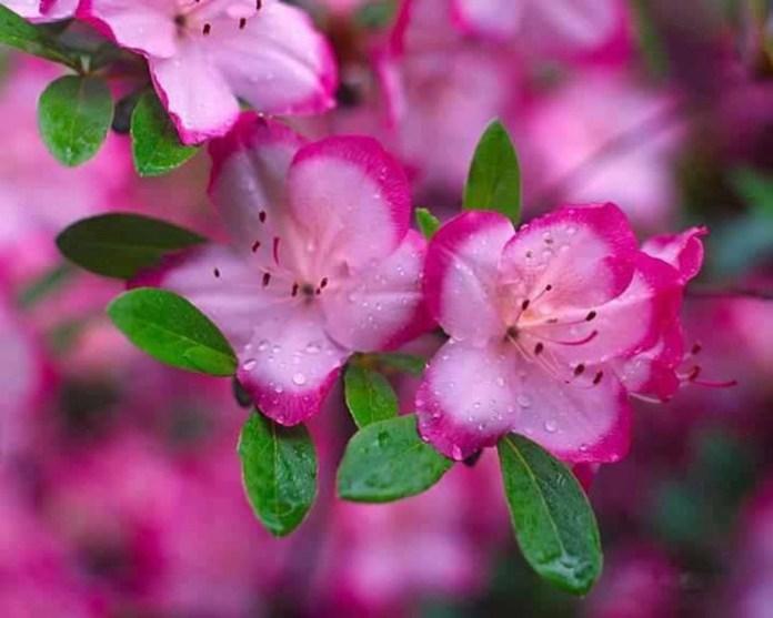 bloom-fresh-flowers- (7)