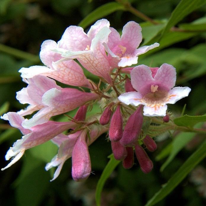 bloom-fresh-flowers- (12)