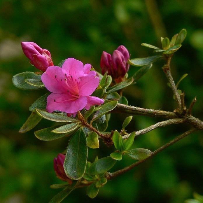 bloom-fresh-flowers- (16)