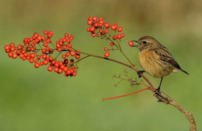 pictures-of-birds-after-successfully-hunted-their-food- (5)
