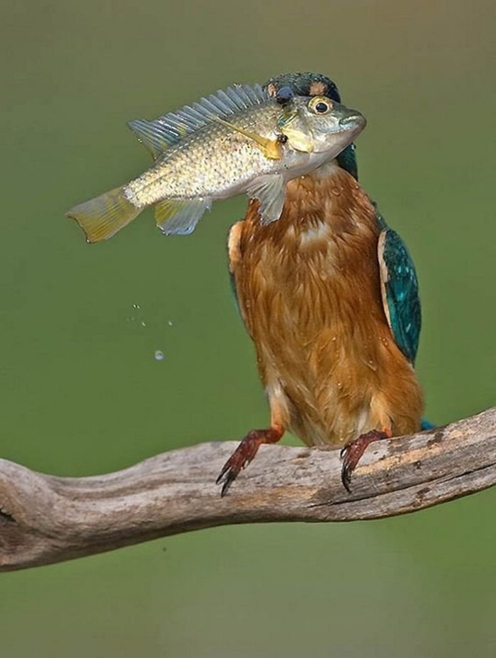 pictures-of-birds-after-successfully-hunted-their-food- (7)