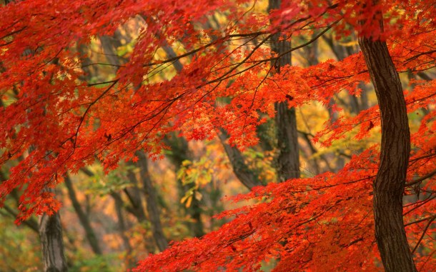 beautiful-autumn-wallpapers- (1)