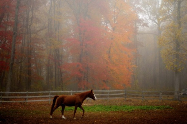 beautiful-autumn-wallpapers- (14)