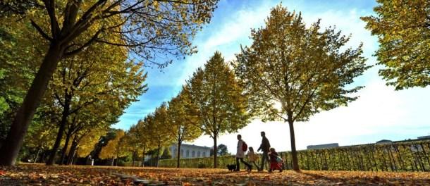 beautiful-autumn-wallpapers- (16)
