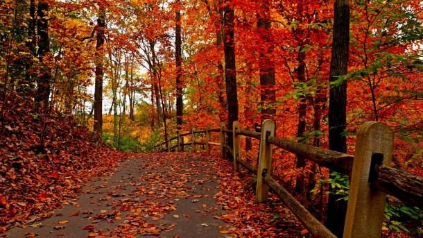 beautiful-autumn-wallpapers- (8)