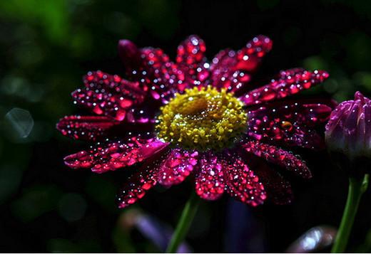 dew-drops- (1)