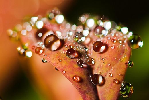 dew-drops- (32)