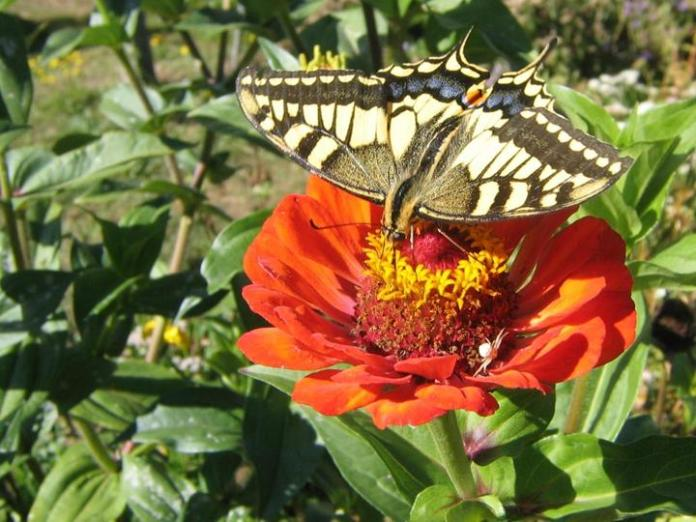 flowers-and-butterfly- (15)