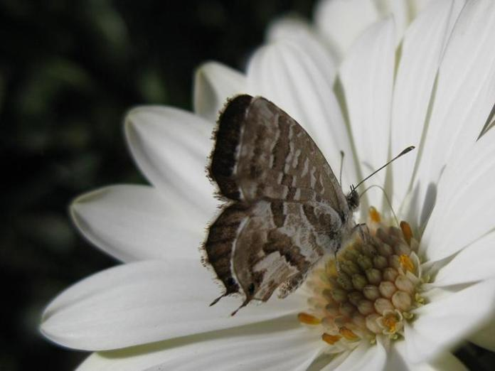 flowers-and-butterfly- (17)