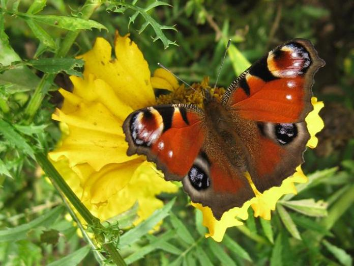 flowers-and-butterfly- (24)