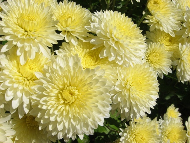 flowers-for-you- (1)