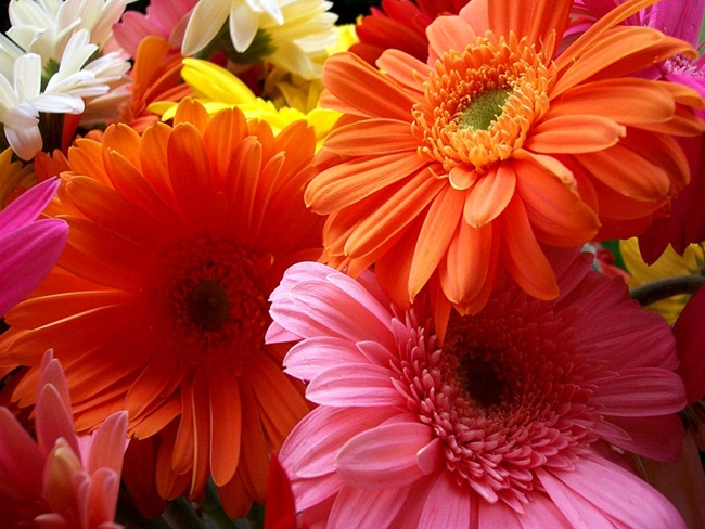 flowers-for-you- (8)