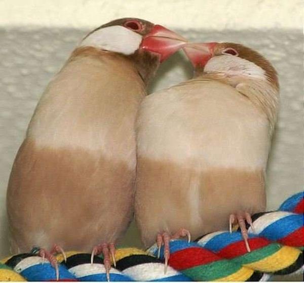 love-birds-kissing- (13)