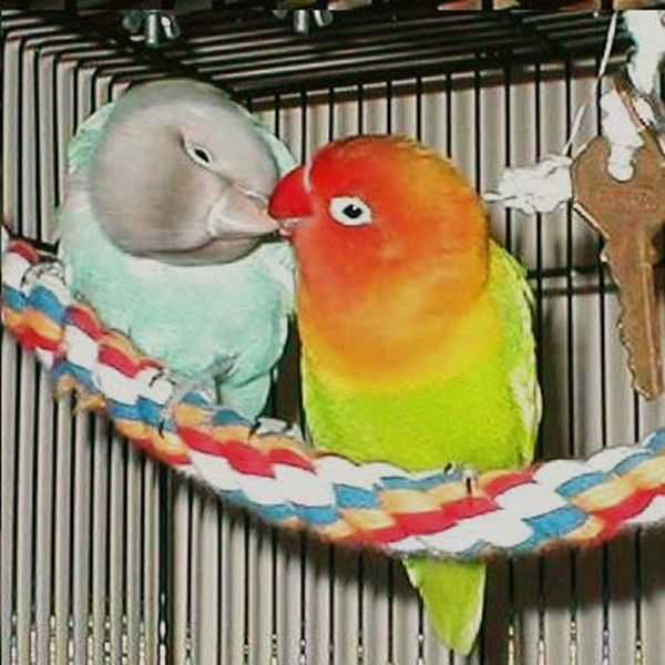 love-birds-kissing- (37)