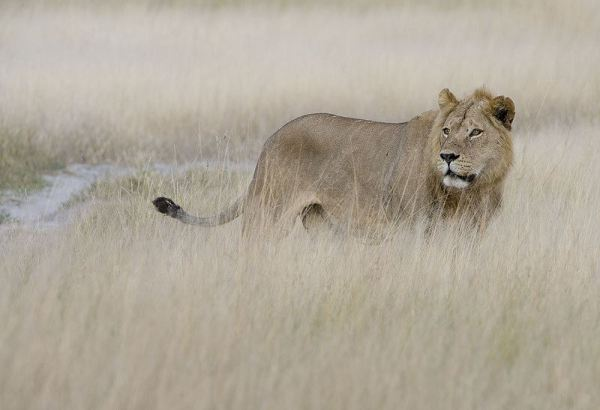 wildlife-of-africa- (5)
